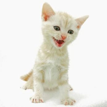「犬好き」「猫好き」集まれ未経験歓迎!もっとペットに詳しくなれちゃいます